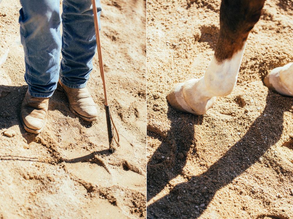 horses268(1).jpg