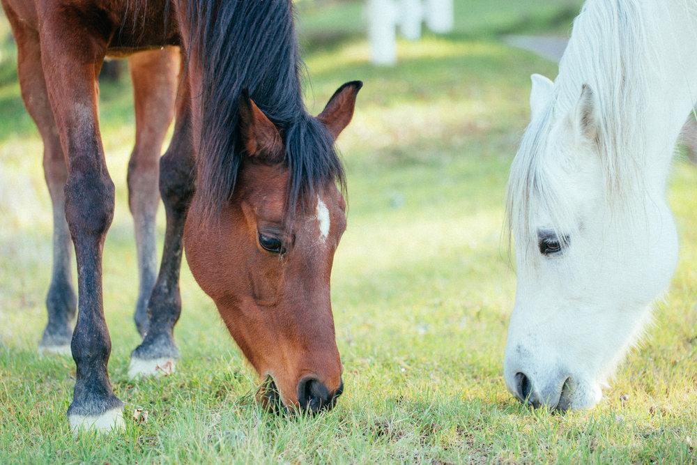 horses034.jpg