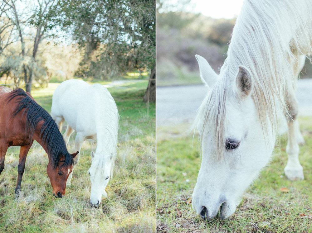 horses048(1) (1).jpg