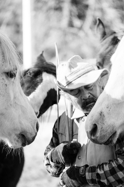horses189.jpg