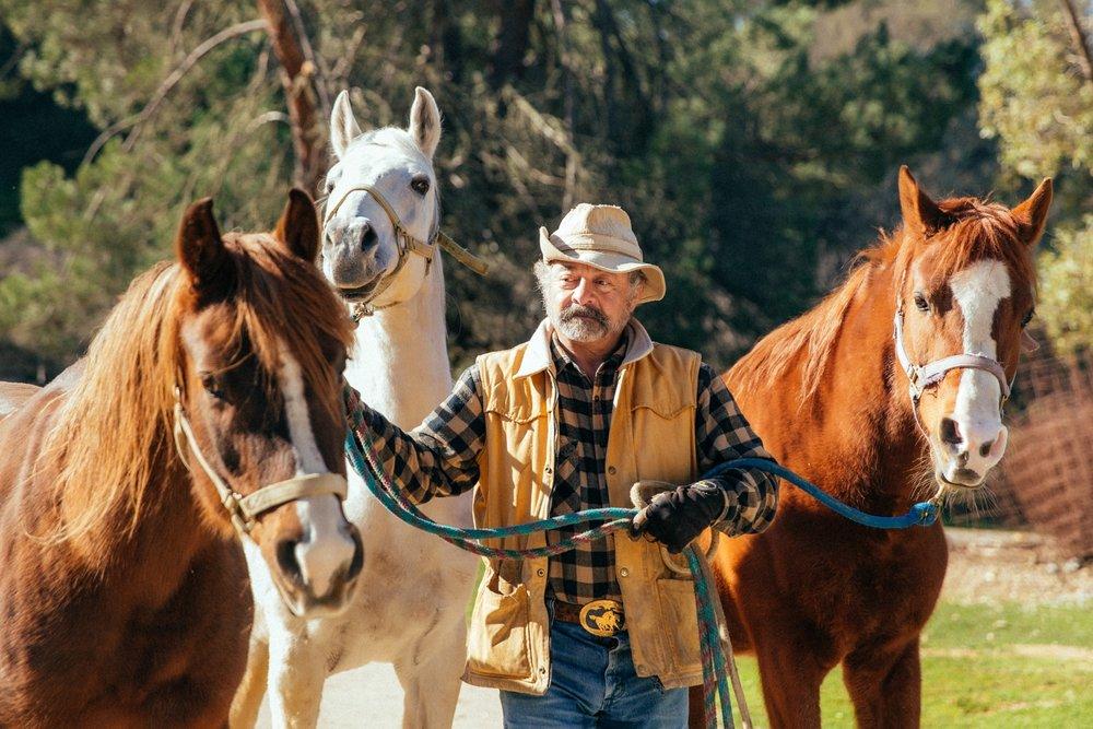 horses230.jpg