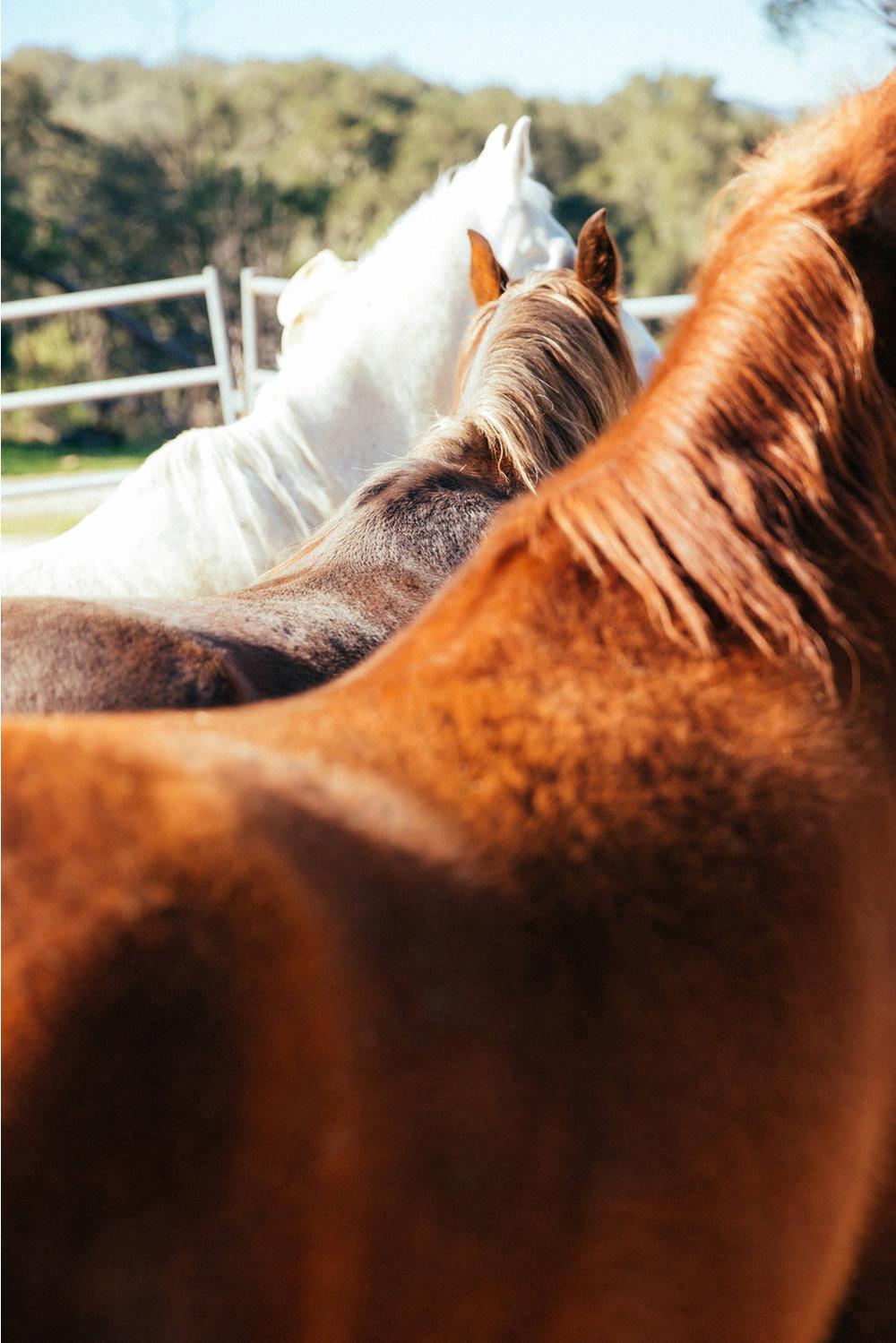 horses096(1) (1).jpg