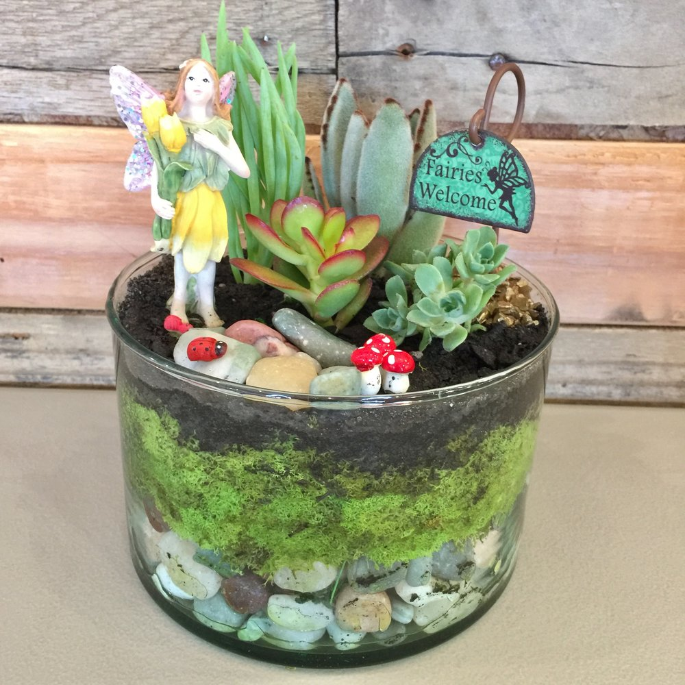 Succulent Planting $35 (Average Price)