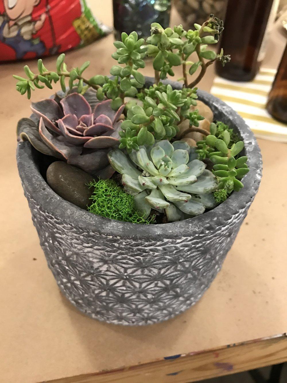 Succulent Garden Avg. $35