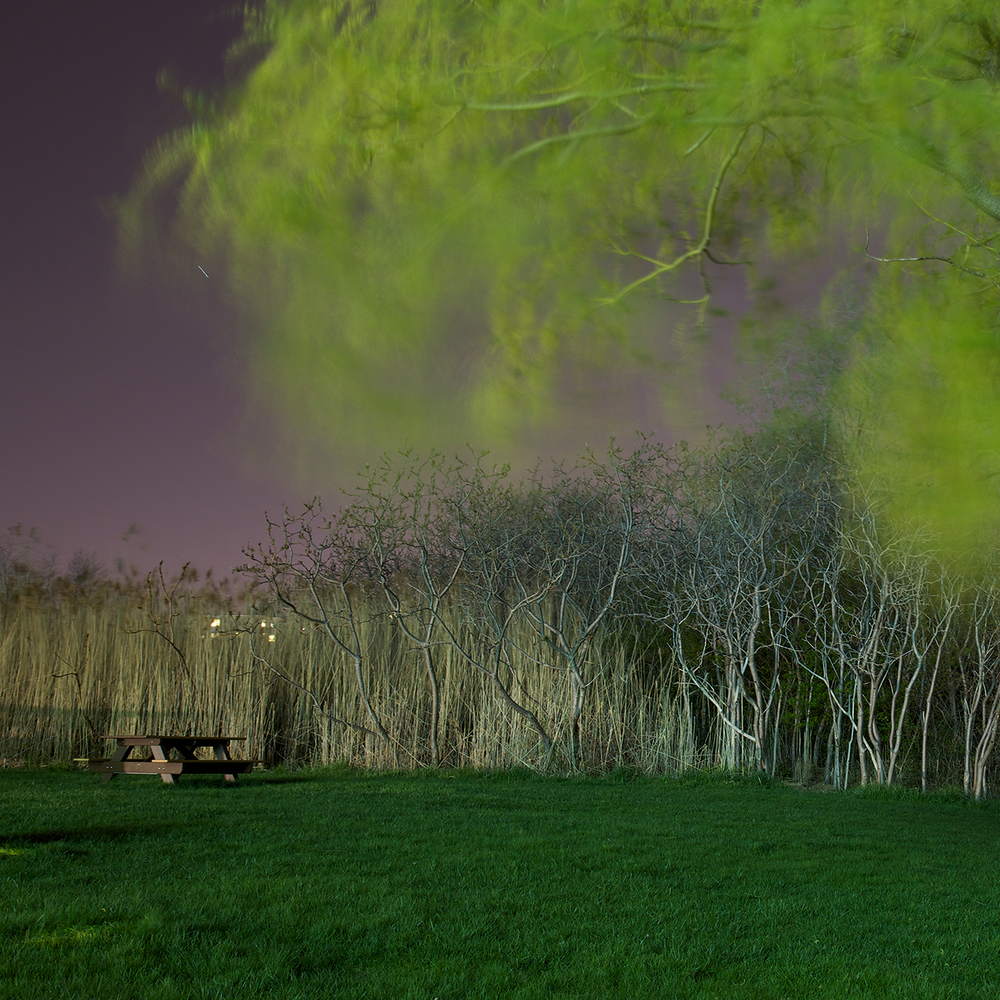 JFK Weeping Willow