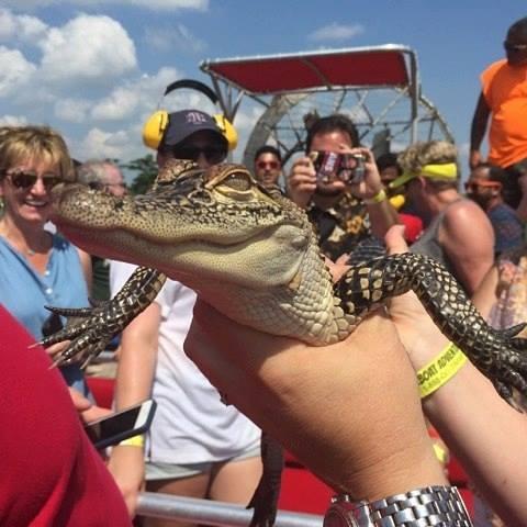 airboat_swamp_tour.jpg