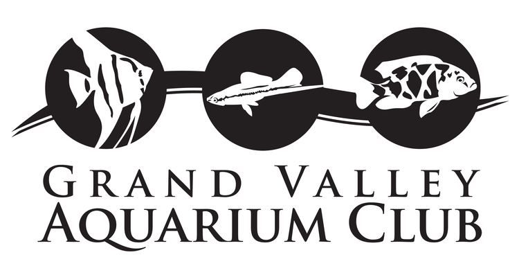 Grand Valley Aquarium Club