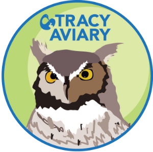tracyaviaryscoutpatch