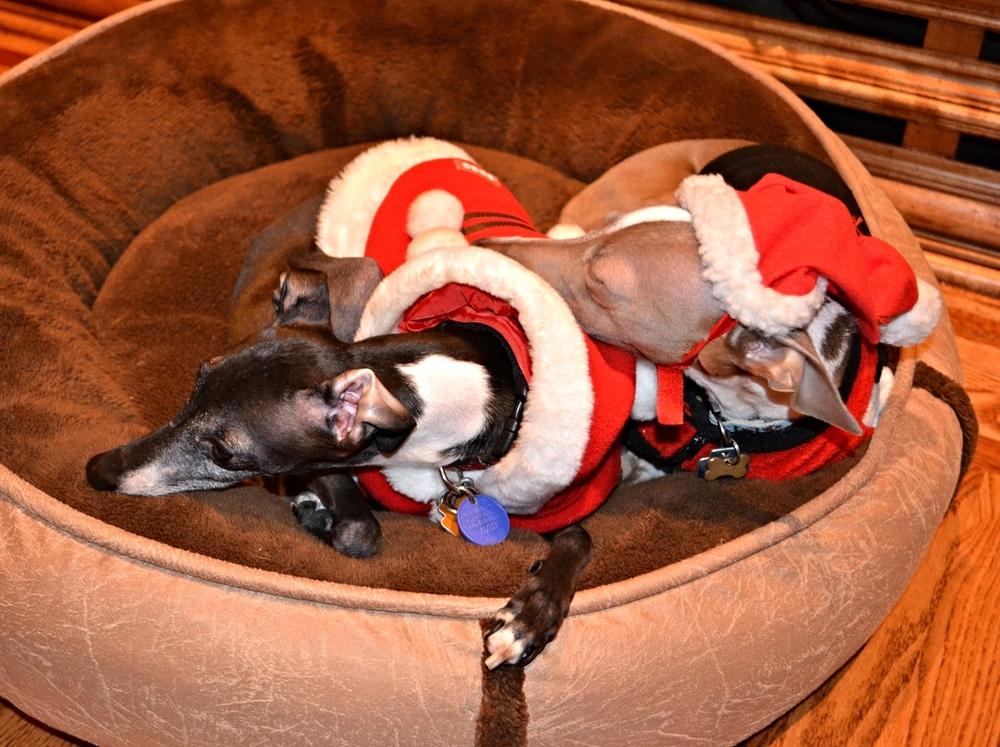 Santa Dogs!