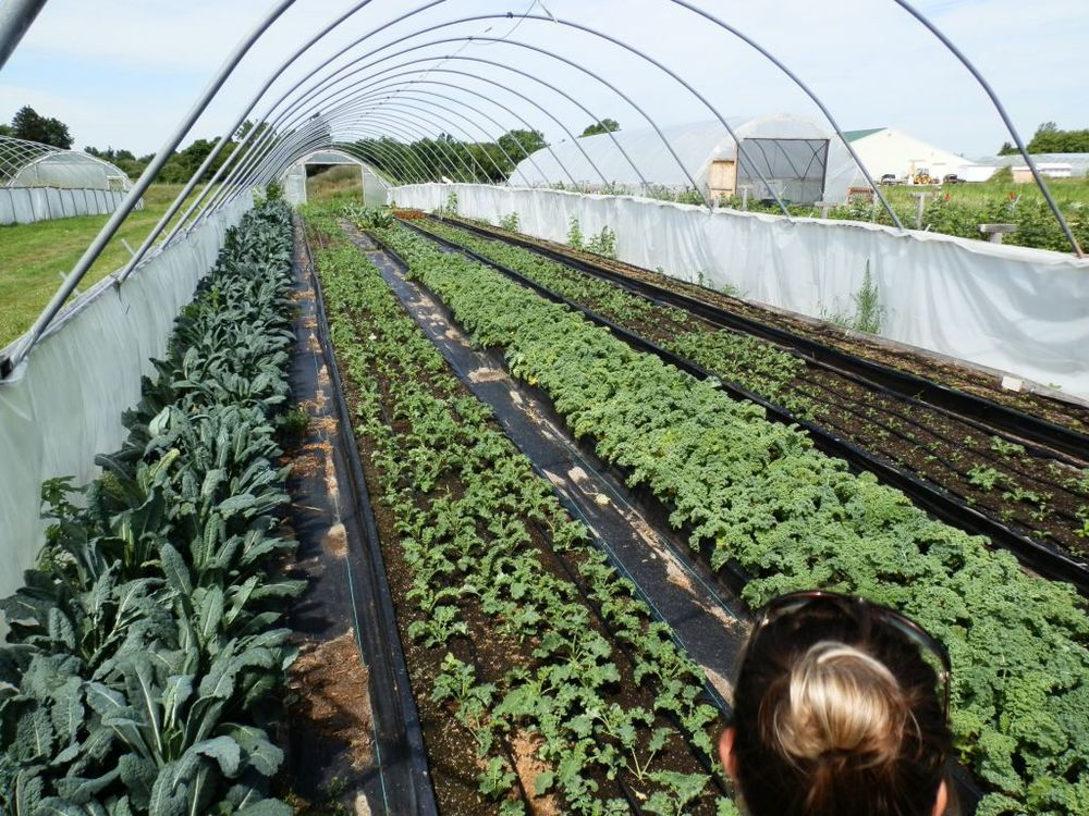 One of several hoop houses enabling year round growing of crops