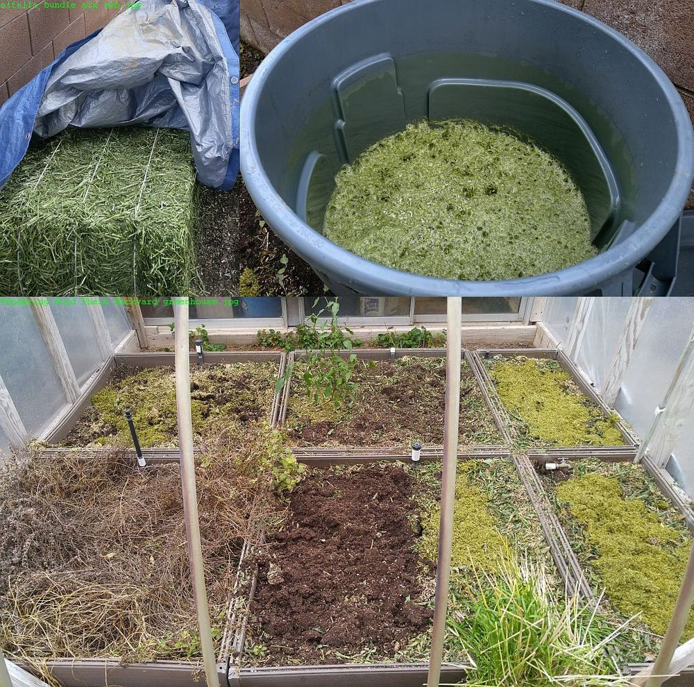 The magic alfalfa, shown above freshly applied to the backyard greenhouse garden beds. Beginning as a bale, when the alfalfa is mixed with filtered water magic happens.