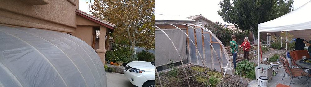 Left, the driveway greenhouse Randy built 3 years ago for about $120.  Right, the backyard greenhouse features a roll up wall for easy climate control.