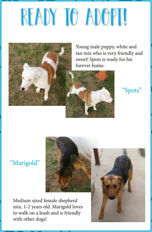 The City of Sand Springs has seen an increase in pet adoptions lately. Here are two dogs currently looking for homes.