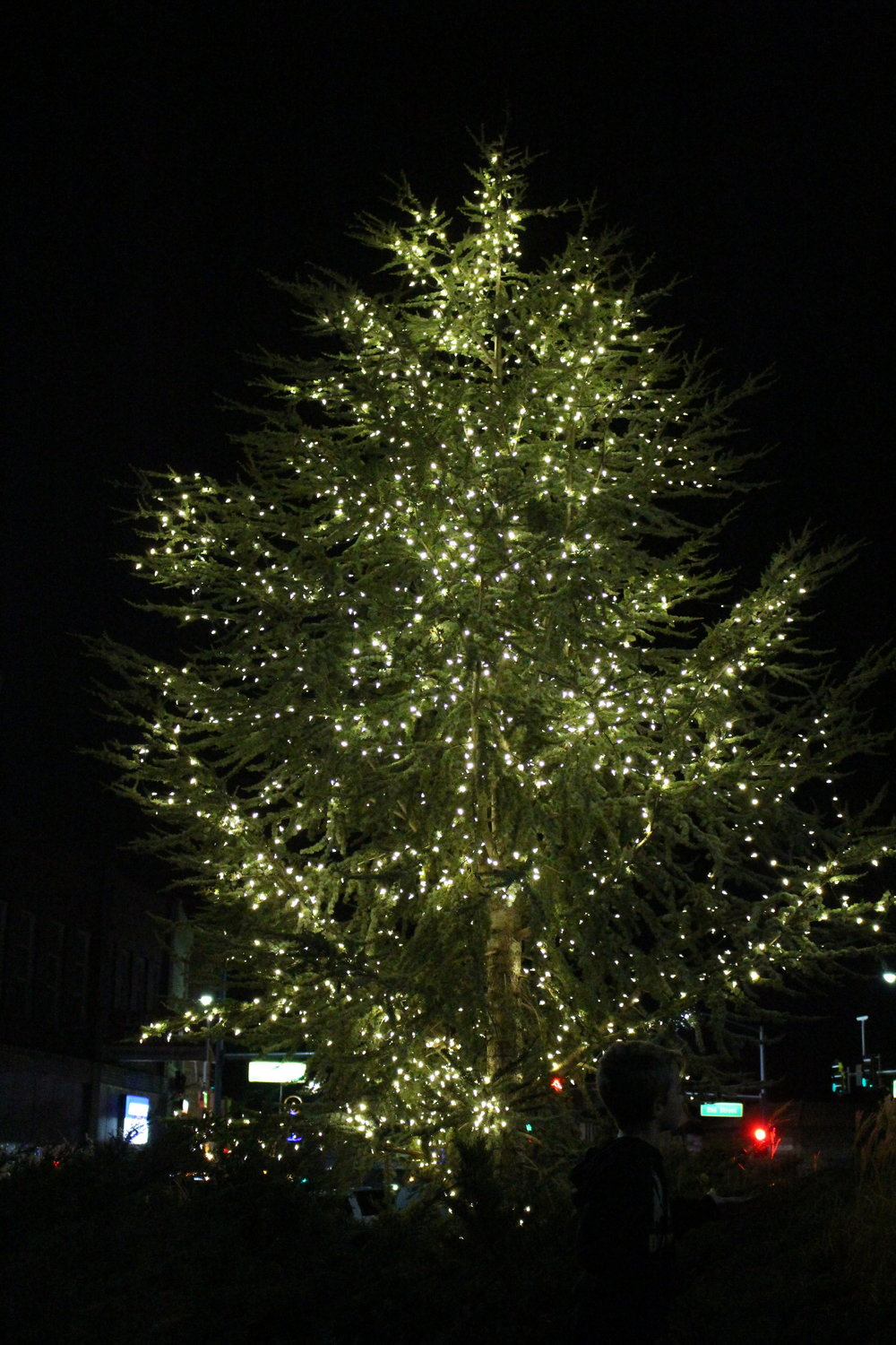 More than 3,000 lights illuminate a tree at the downtown Triangle for the Inaugural Christmas Tree Lighting ceremony. (Photo: Scott Emigh).