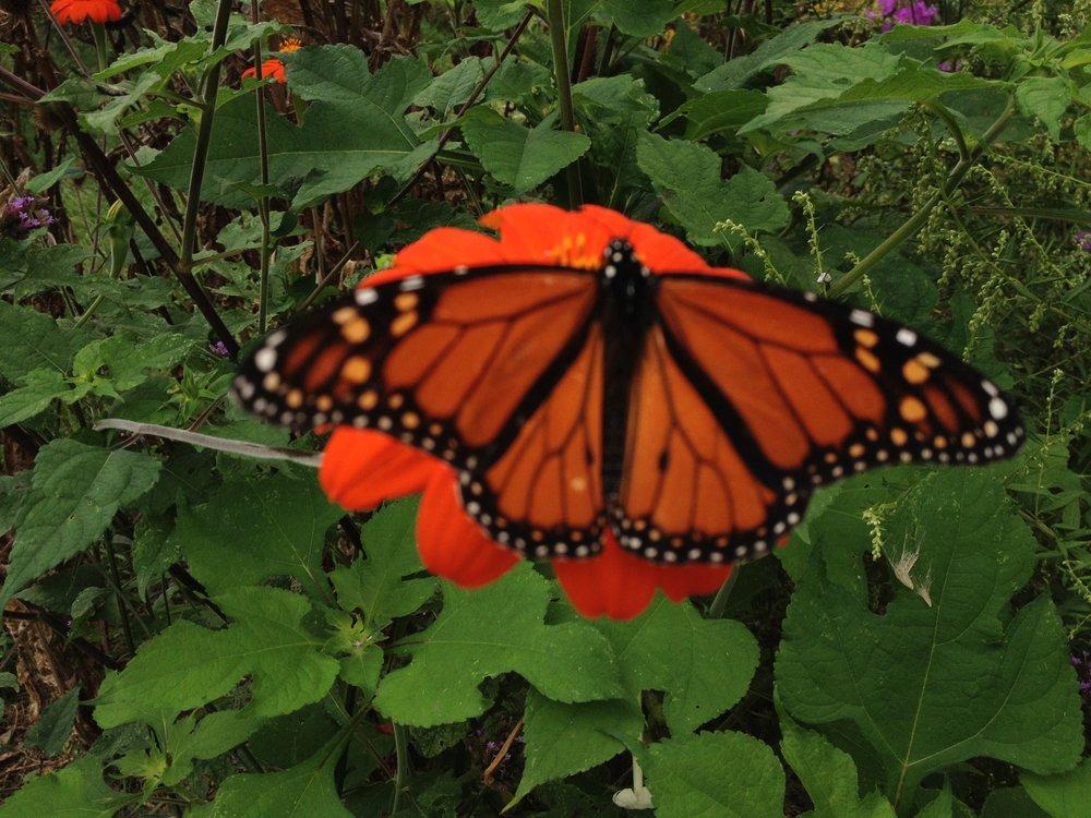Butterfly Breathing