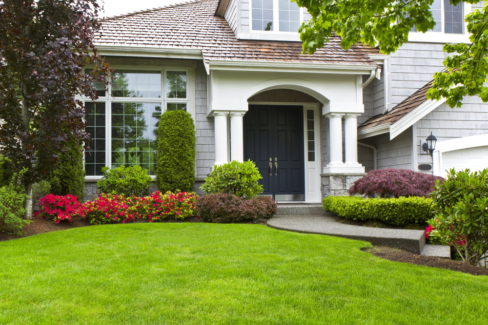 FRONT YARD LANDSCAPING WITH YEW AND JAPANESE MAPLE.jpg