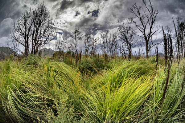 Storm and ribbon grass, Tasmania by Michael Smyth