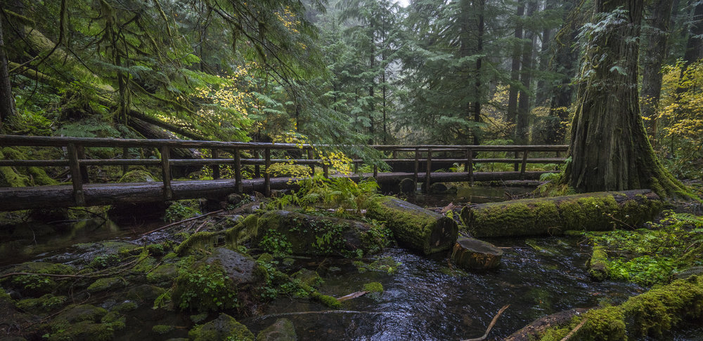 McKenzie River area, Oregon