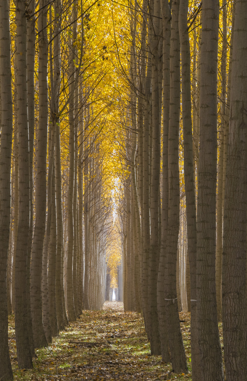 Boardman Tree Farm, Oregon