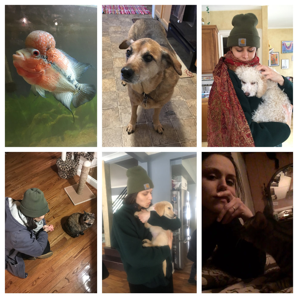 A (by no means comprehensive) collection of some of the furry (& finny) friends we met on the road.