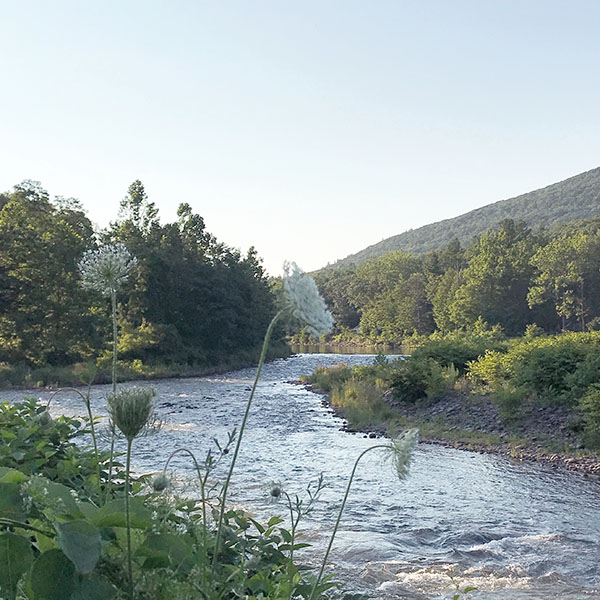 The flowing Esopus Creek with Queen Anne's Lace in New York State's Catskill Park