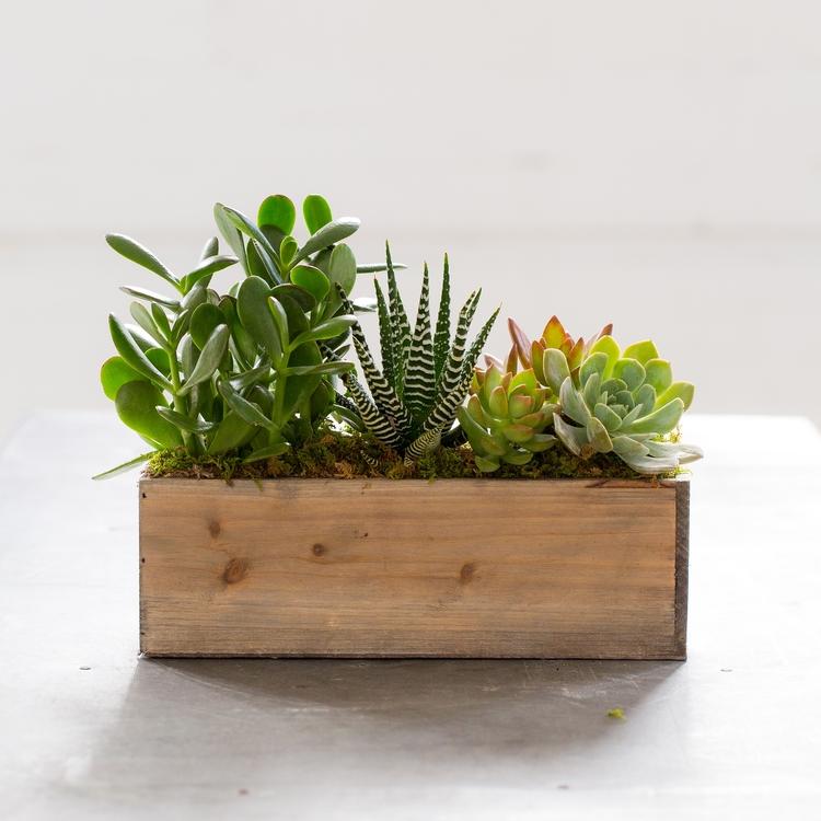 Box of Succulents