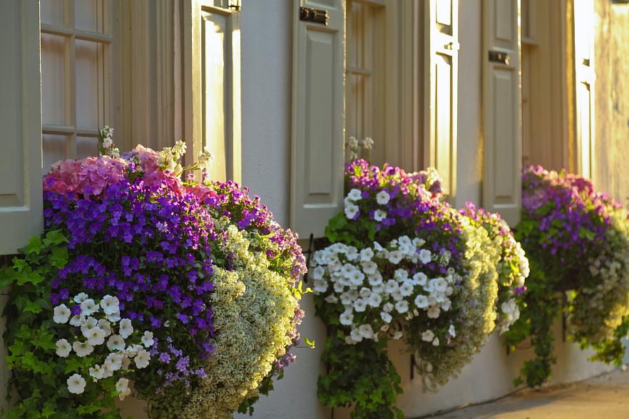 Boston Window Boxes