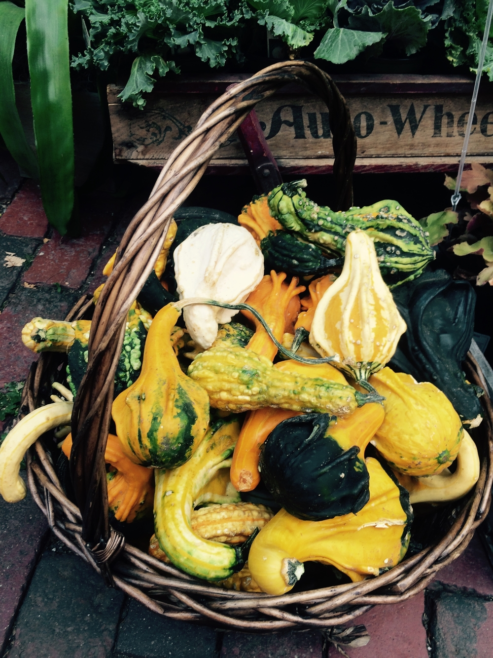 Welcome to...Our Warty Gourd World!