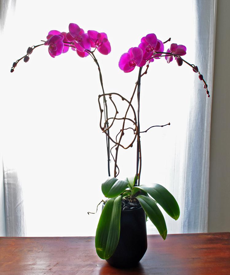 Grand Orchid.jpg
