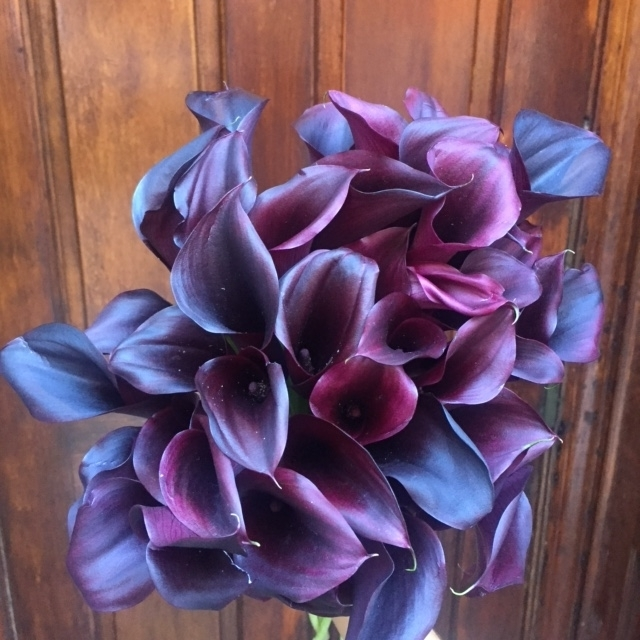 Fall Flowers Boston - Black Callas
