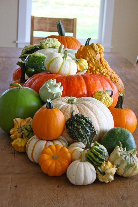 gourd tablescape.jpg