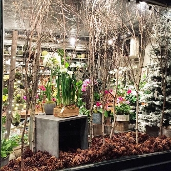 Have you seen our latest window display? The drifts of pinecones and tall branchy birch makes it feel like a wintery wonderland!