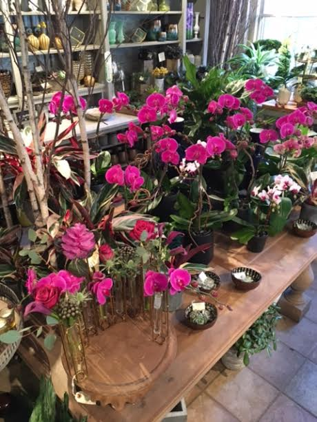 Our new center display represents all the beautiful pops of color that come with spring - who can resist these beautiful magenta orchids and verigated stromanthe?