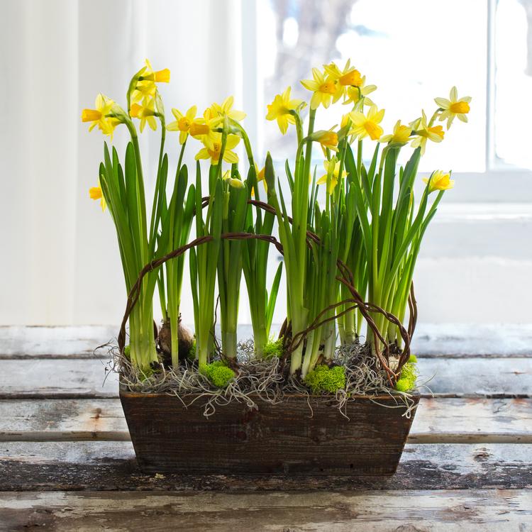 Box of daffodils.jpg