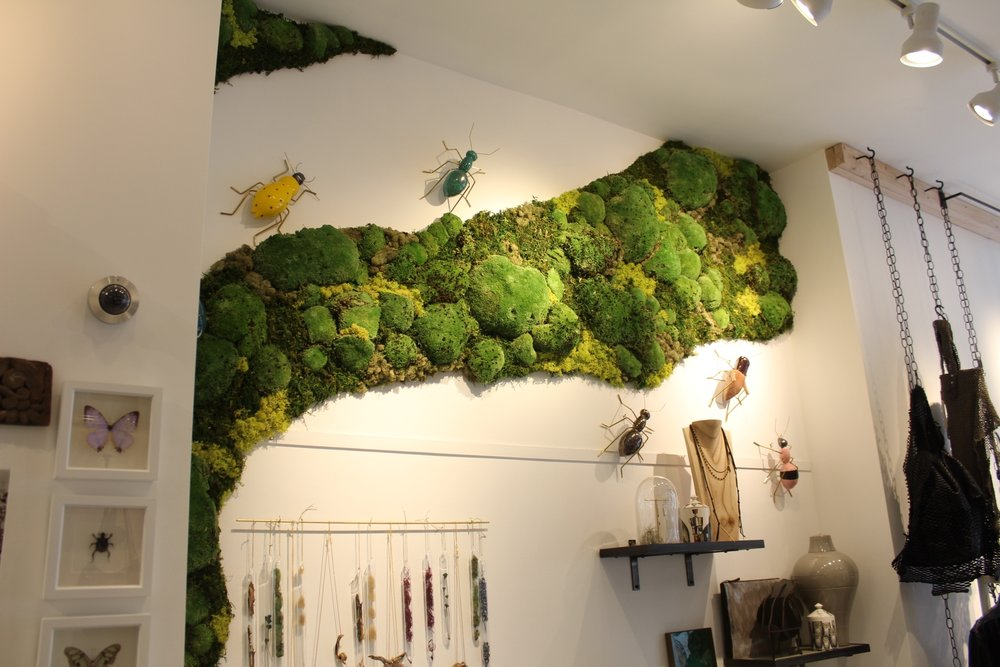 Boston moss wall installation