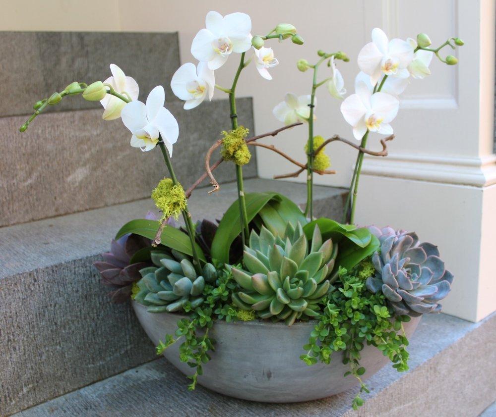 orchids flowers boston