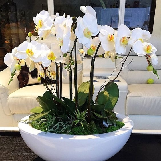 Lobby Planters - Orchids