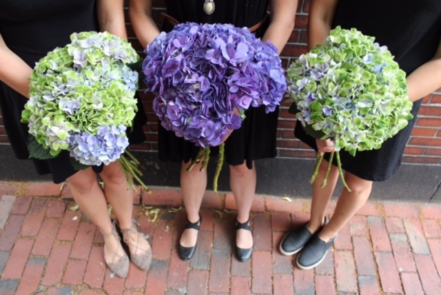 boston flower delivery hydrangea