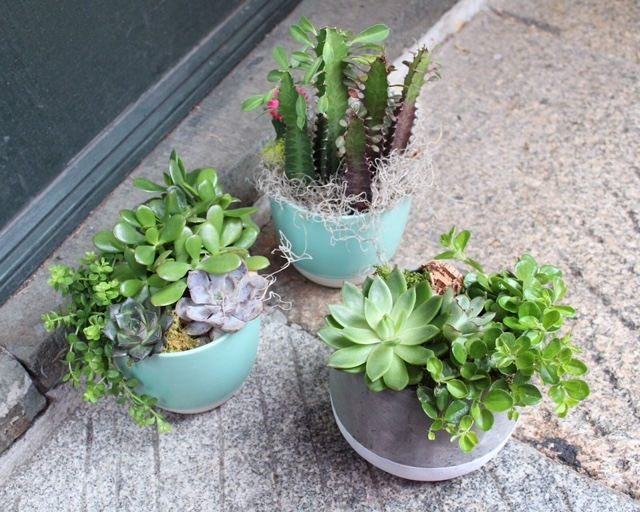 boston succulents delivery