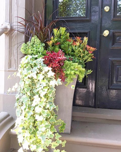 boston planting urban garden
