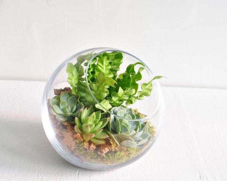 globe terrarium.jpg