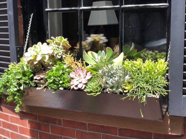 Window Box 3.jpeg