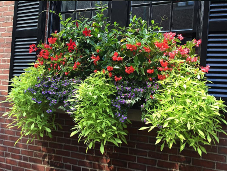 window box 2.png