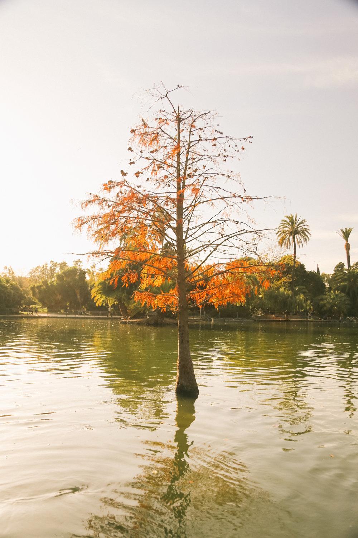 Barcelona Citudella Park_-14.jpg