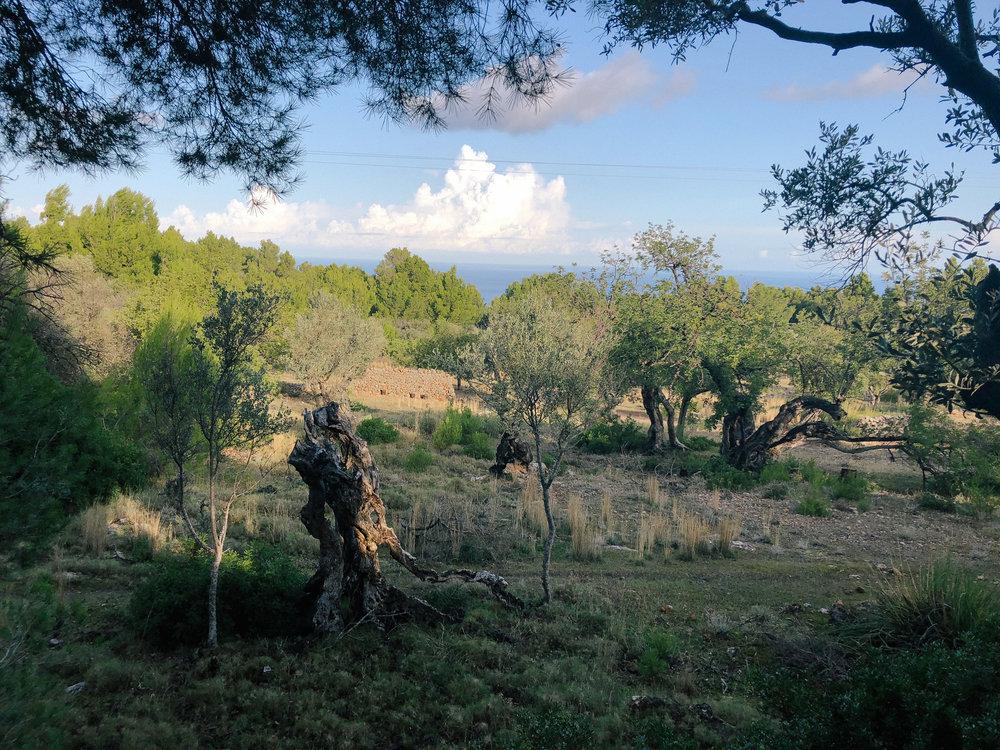 Mallorca*-57.jpg