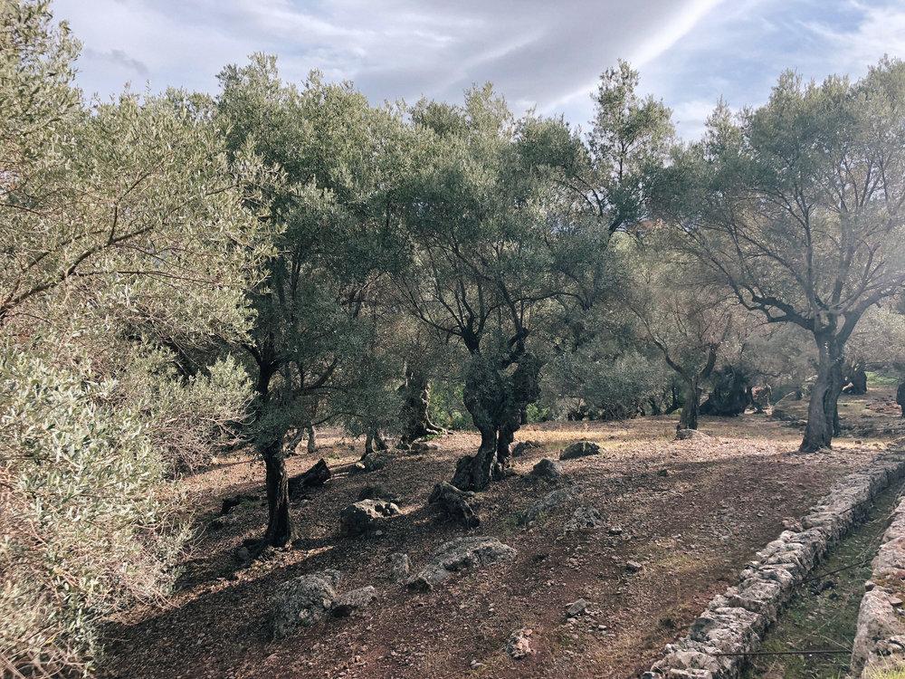 Mallorca*-68.jpg