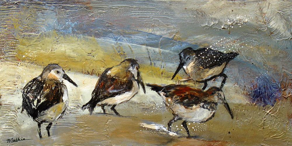 """Shorebirds, V"""