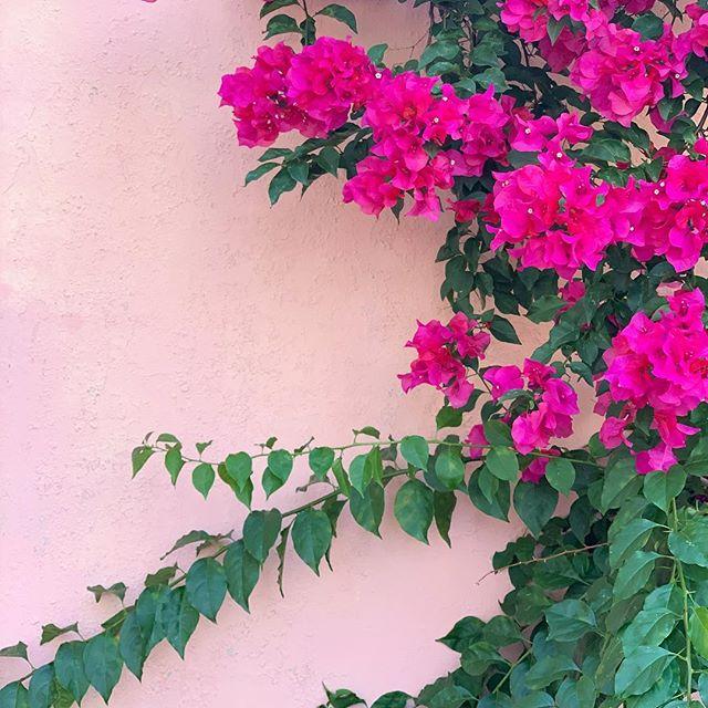 Los flores en la ciudad de #oaxaca. #lostinplantslation