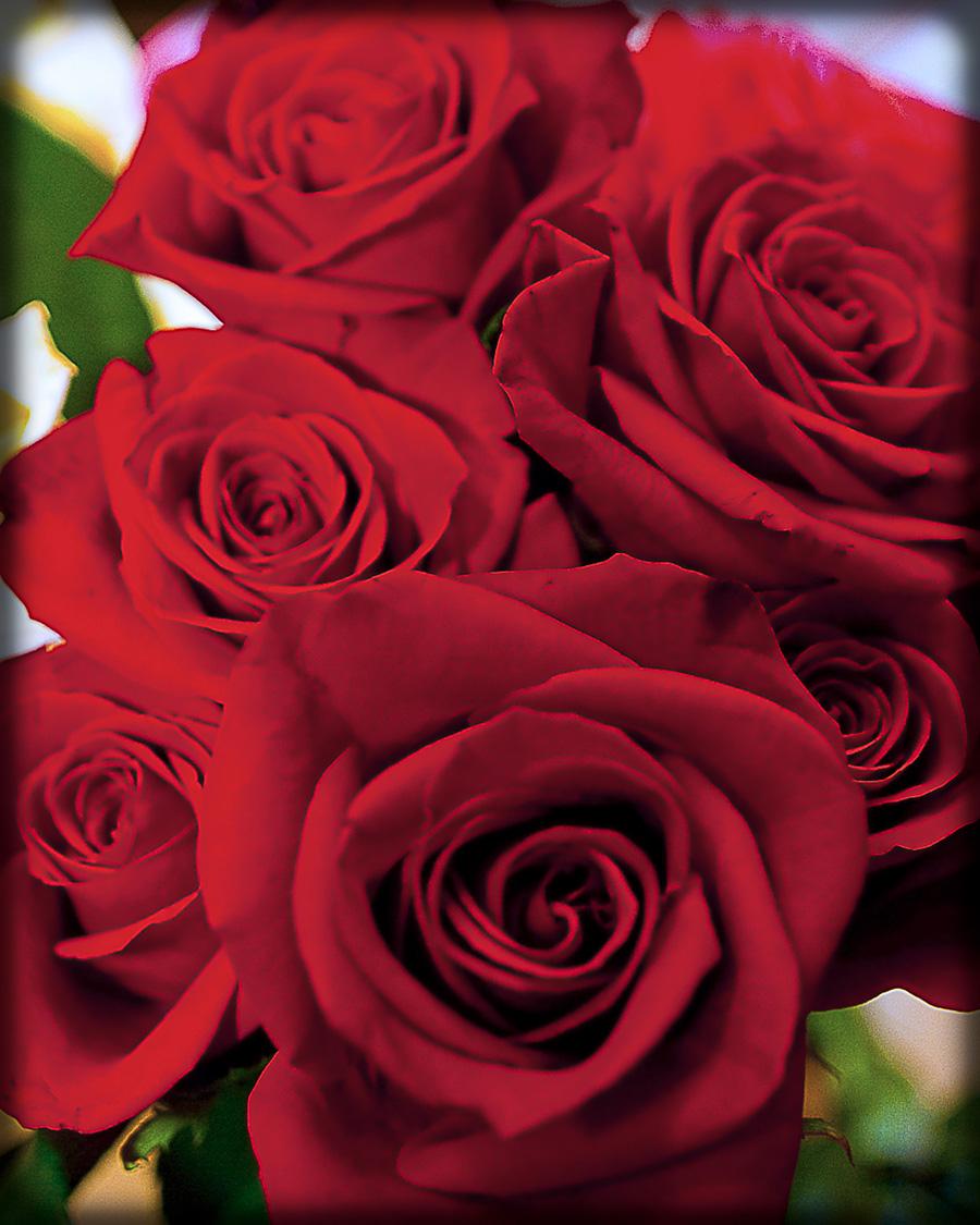 web roses 16x20.jpg
