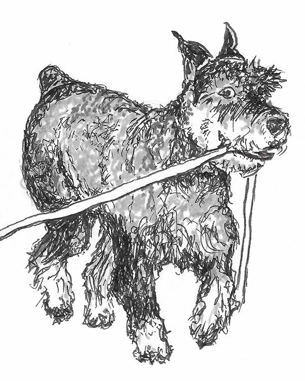 Dog with leash web.jpg